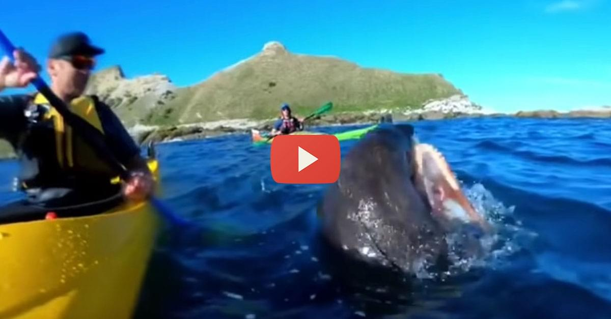 Watch: Seal Slaps Man's Face with an Octopus