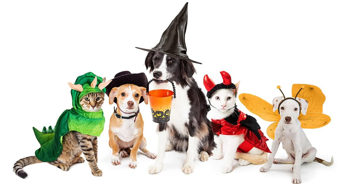 Pets Owners Spending $500M on Animal Costumes this Halloween