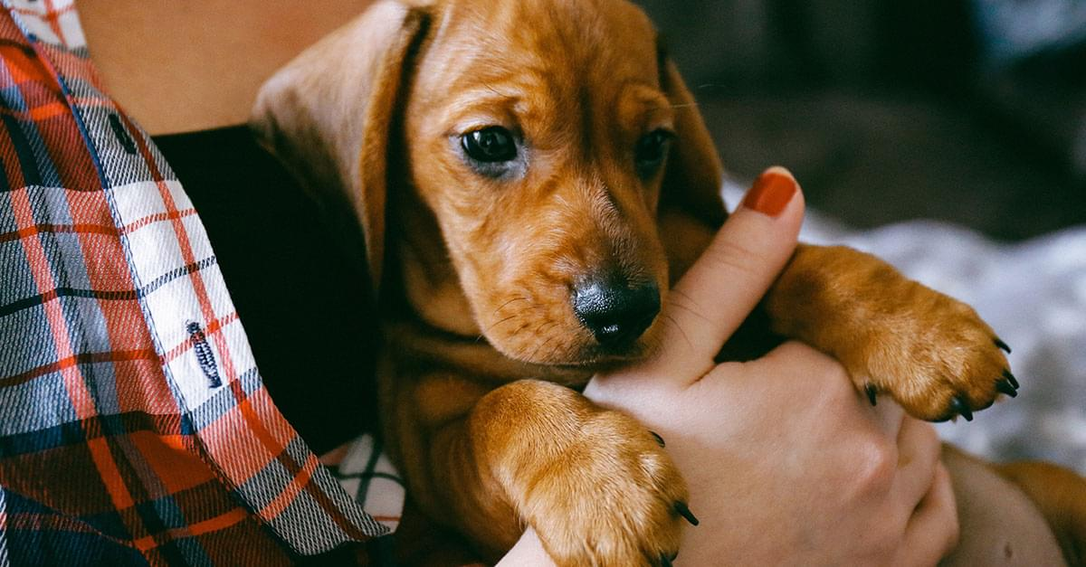 You Can Get Paid $100 an Hour to Pet Puppies!