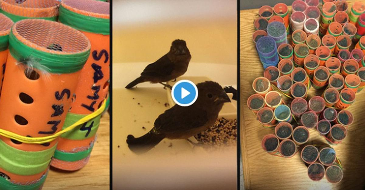 Passenger Caught Smuggling Live Birds in Hair Rollers