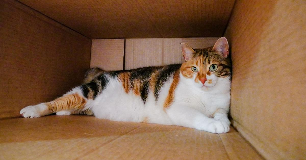 Yikes! Mom Accidentally Mails Family Cat