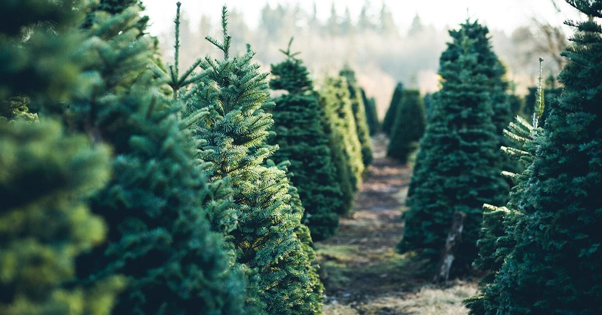 Here's Where to Recycle Your Christmas Tree in the Triangle