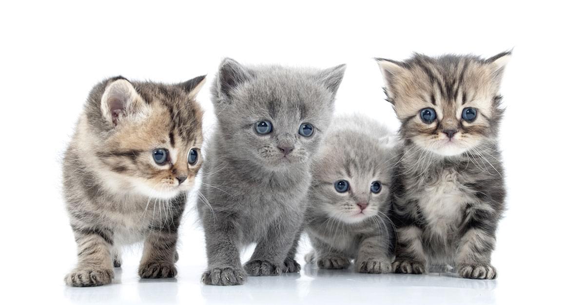 Border Patrol Agents Found 4 Kittens Hidden in a Man's Pants