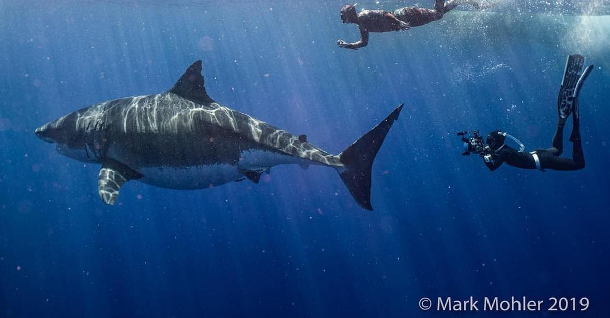 Watch: Divers Spot The World's Largest Ever Recorded Great White Shark