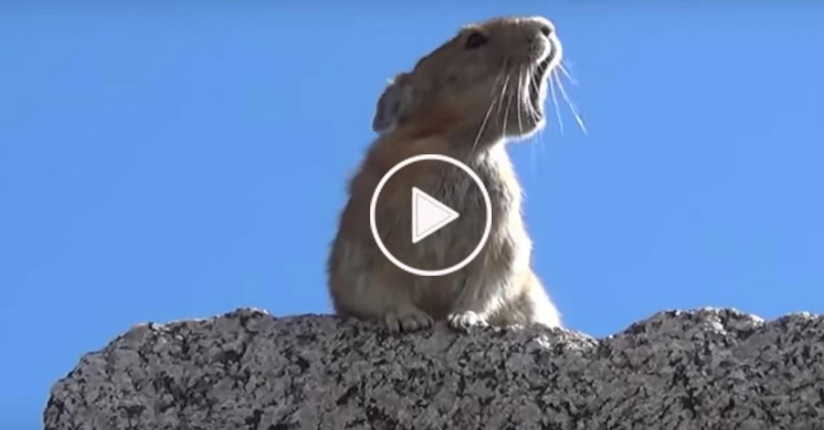 Watch: Pika sings along to Queen