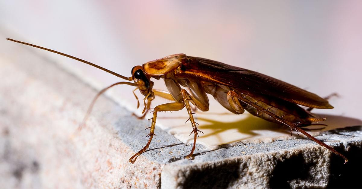 Zoo lets people name a cockroach after their ex, then feed it to a meerkat on Valentine's Day