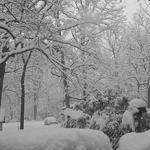 Tus fotos de la Nieve