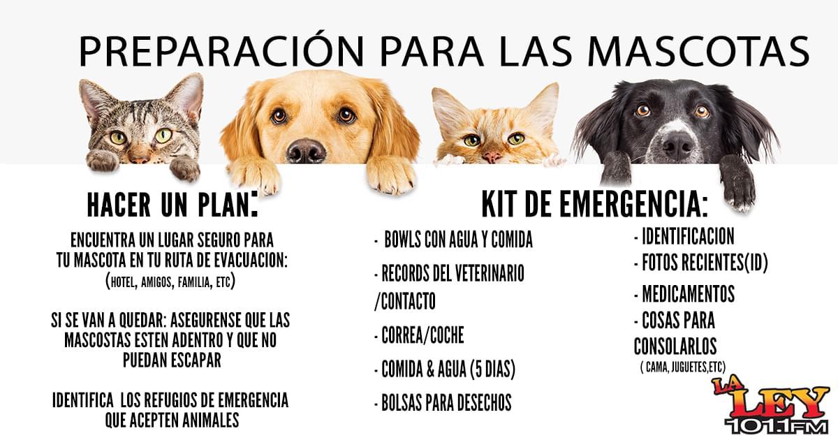 Prepara a tu Mascota para el Huracán
