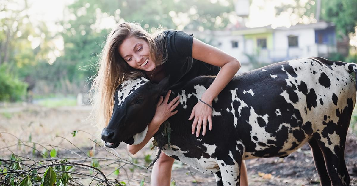 La Nueva Tendencia para tu Salud: Abrazar a Vacas