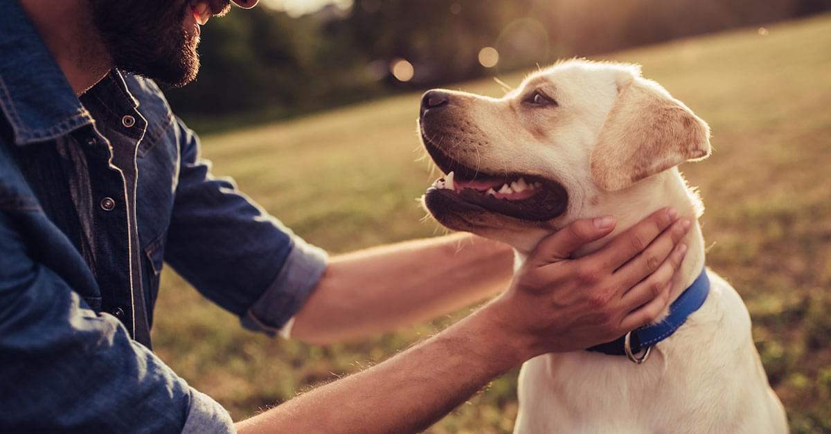 El perro, el mejor amigo del hombre?