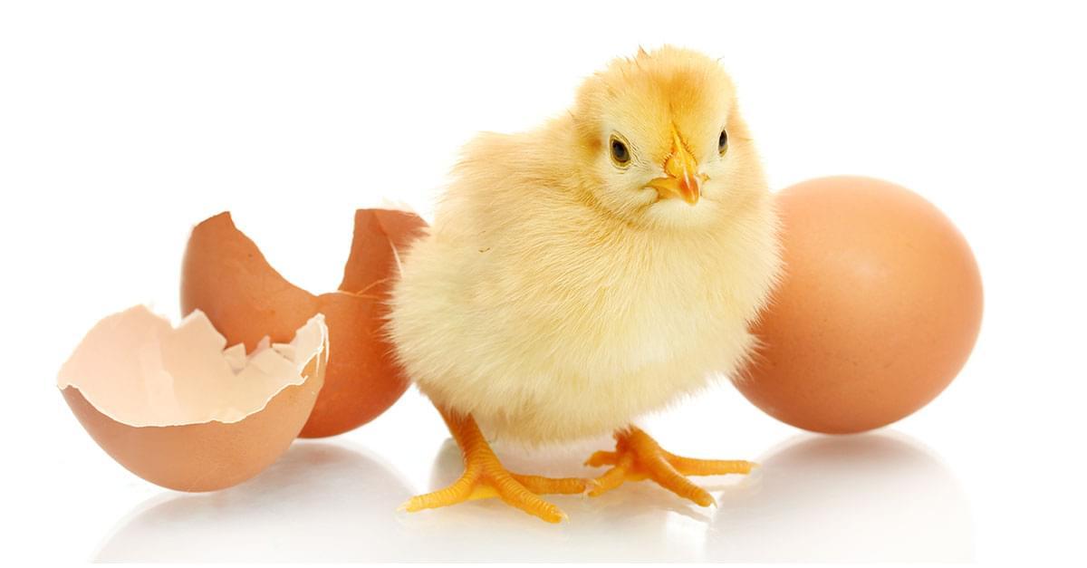 Que llego primero el Huevo o la Gallina?