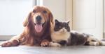 Que tanto estas dispuesto a hacer por tu mascota?