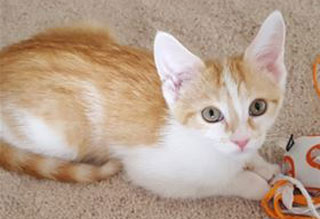 Kitties and K9's: Alfred