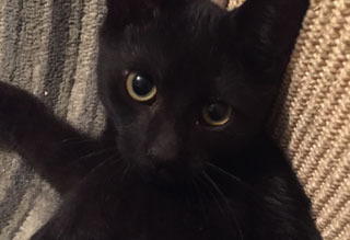 Kitties and K9s: Edgar
