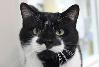 Kitties and K9's: Norman