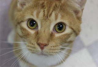 Kitties and K9s: Bobby