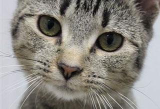 Kitties and K9s: Darlene