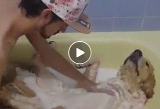 Dog gets bath