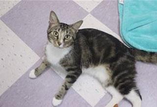 Kitties and K9s: Tommy Bahama
