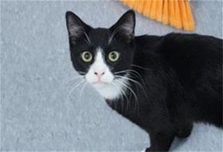 Kitties and K9s: Domino