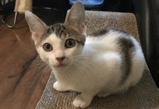 Kitties and K9s: Roy