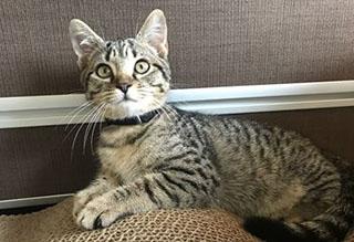 Kitties and K9s: Austin