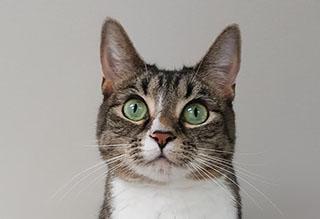 Kitties and K9s: Rita