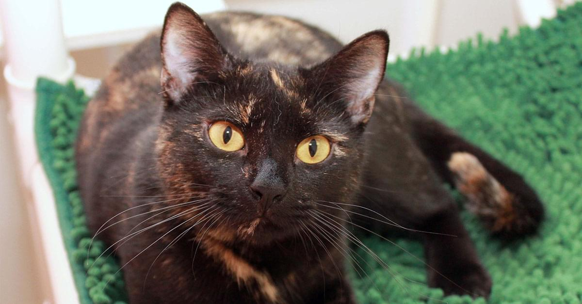 Kitties and K9s: Belinda