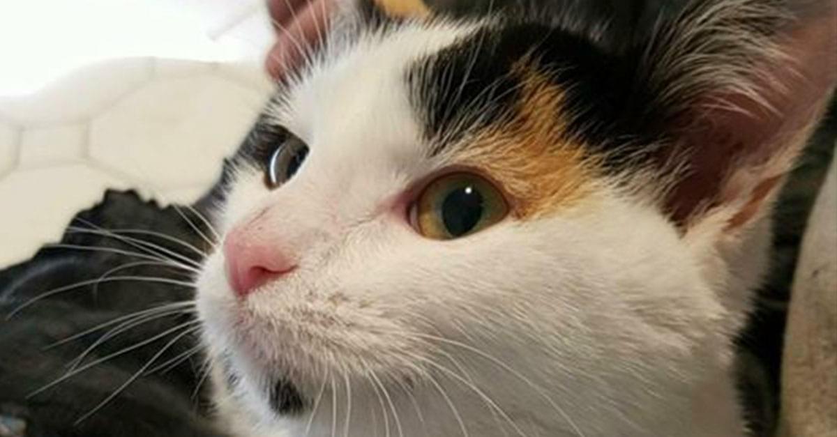 Kitties and K9s: Miss Mittens