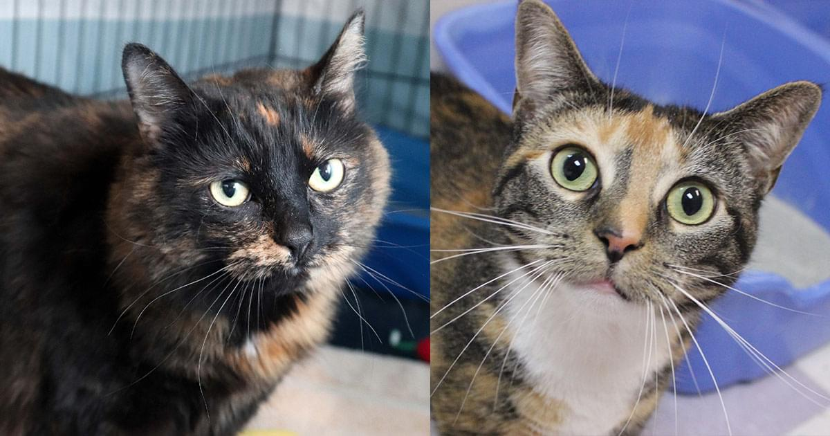 Kitties and K9s: Aviva and Peony