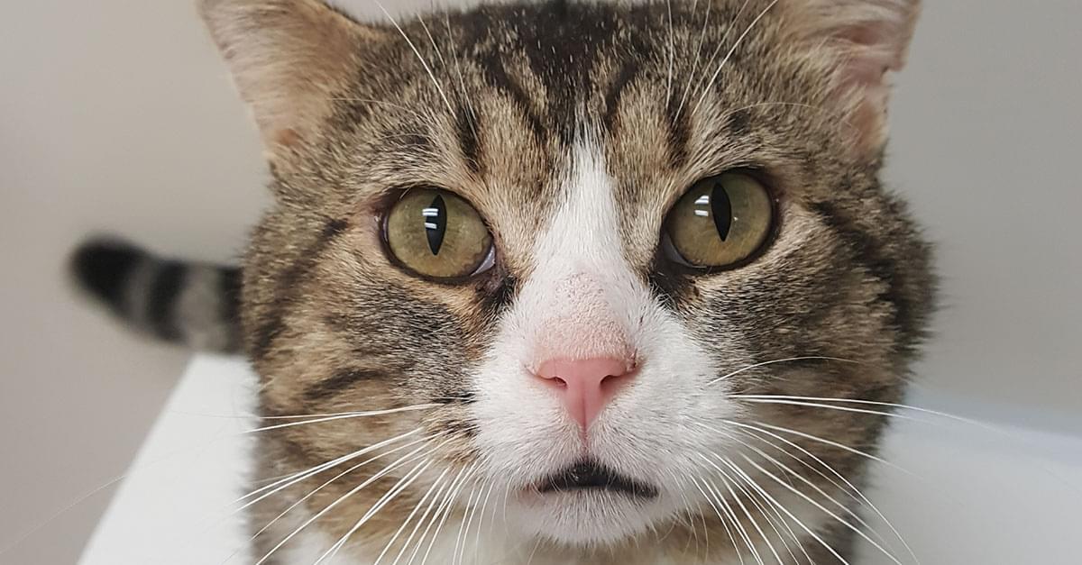 Kitties and K9s: Randolph