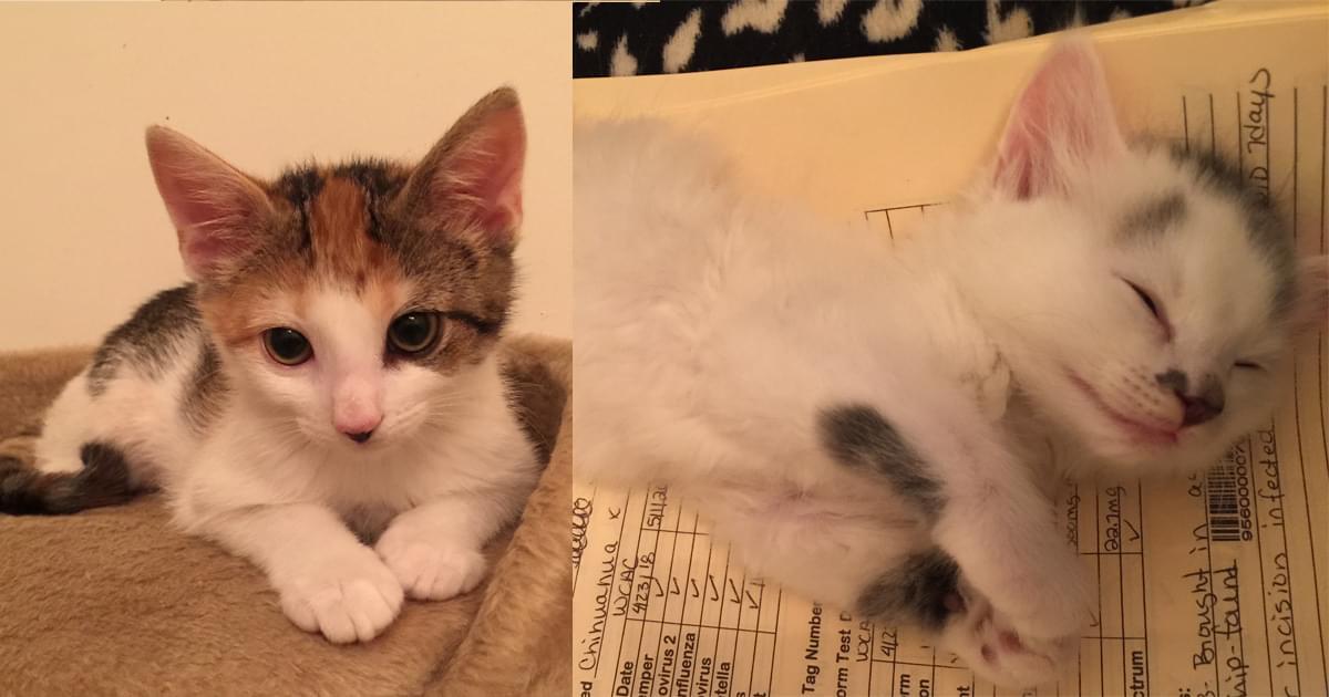 Kitties and K9s: Cheyenne and Cherokee