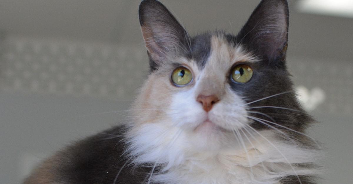 Kitties and K9s: Gabriella