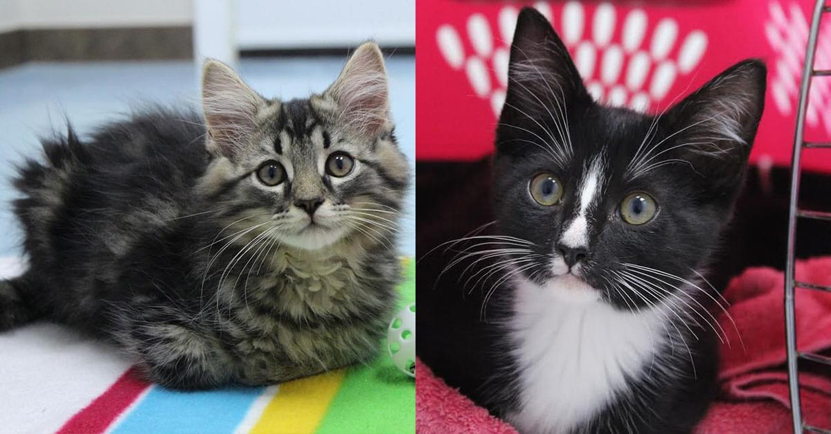 Kitties and K9s: Wash and Kaylee