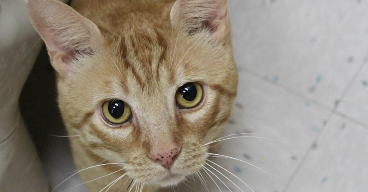 Kitties and K9s: Robert