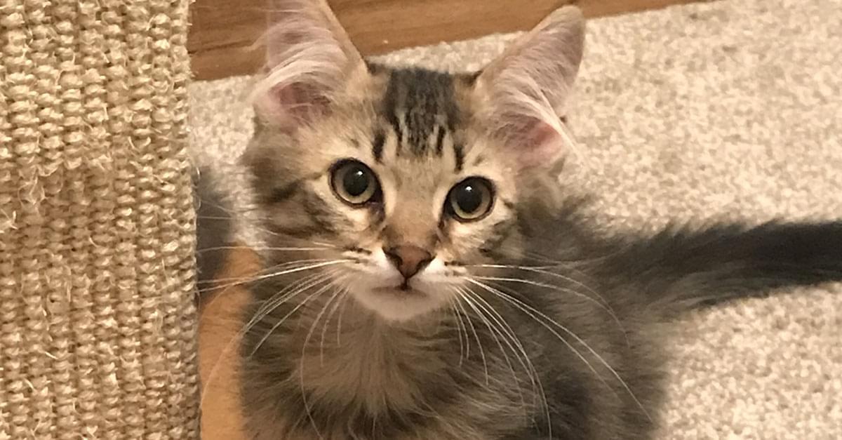 Kitties and K9s: Fez