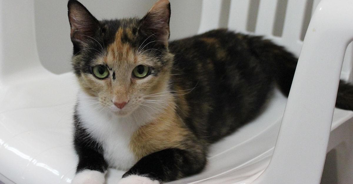 Kitties and K9s: Lizzie