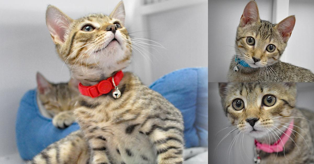Kitties and K9s: Grey's Anatomy Cats