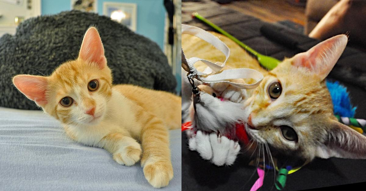Kitties and K9s: Fortune and Royal