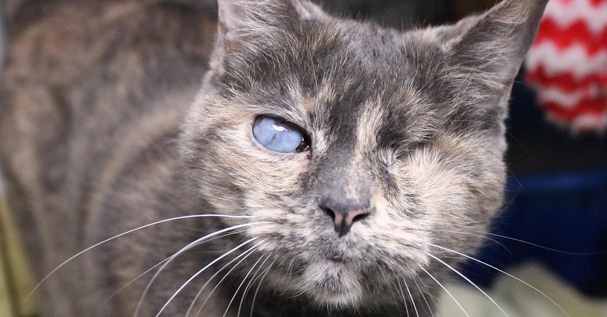 Kitties and K9s: Liza