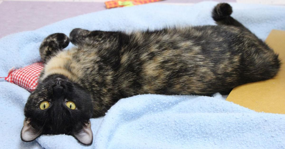 Kitties and K9s: Posey