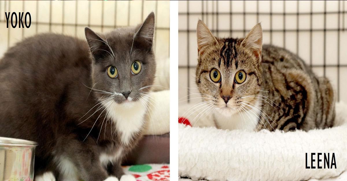 Kitties and K9s: Yoko and Leena