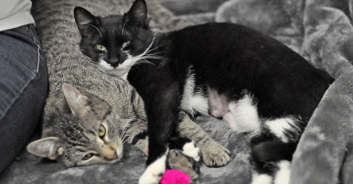 Kitties and K9s: Kiki and Polly