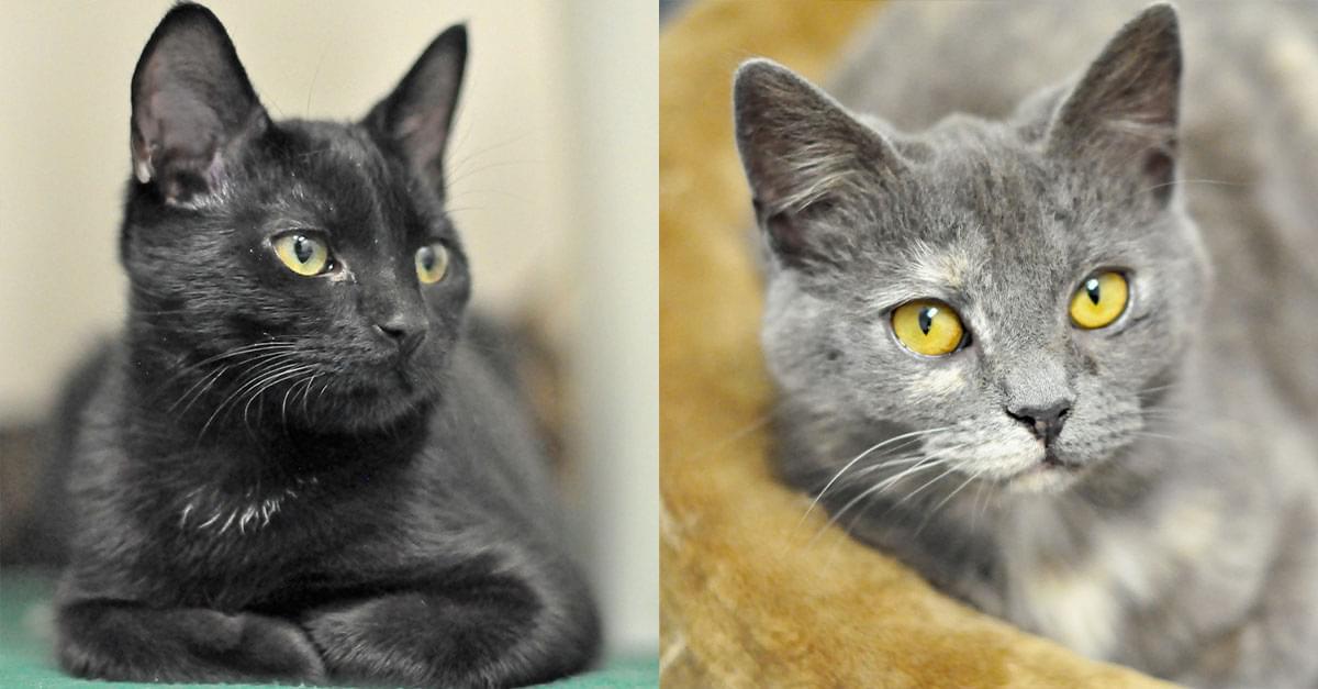 Kitties and K9s: Adam and Maya Sue