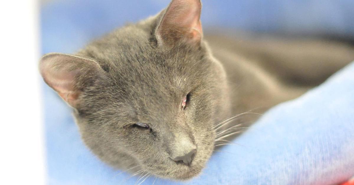 Kitties and K9s: Cassius