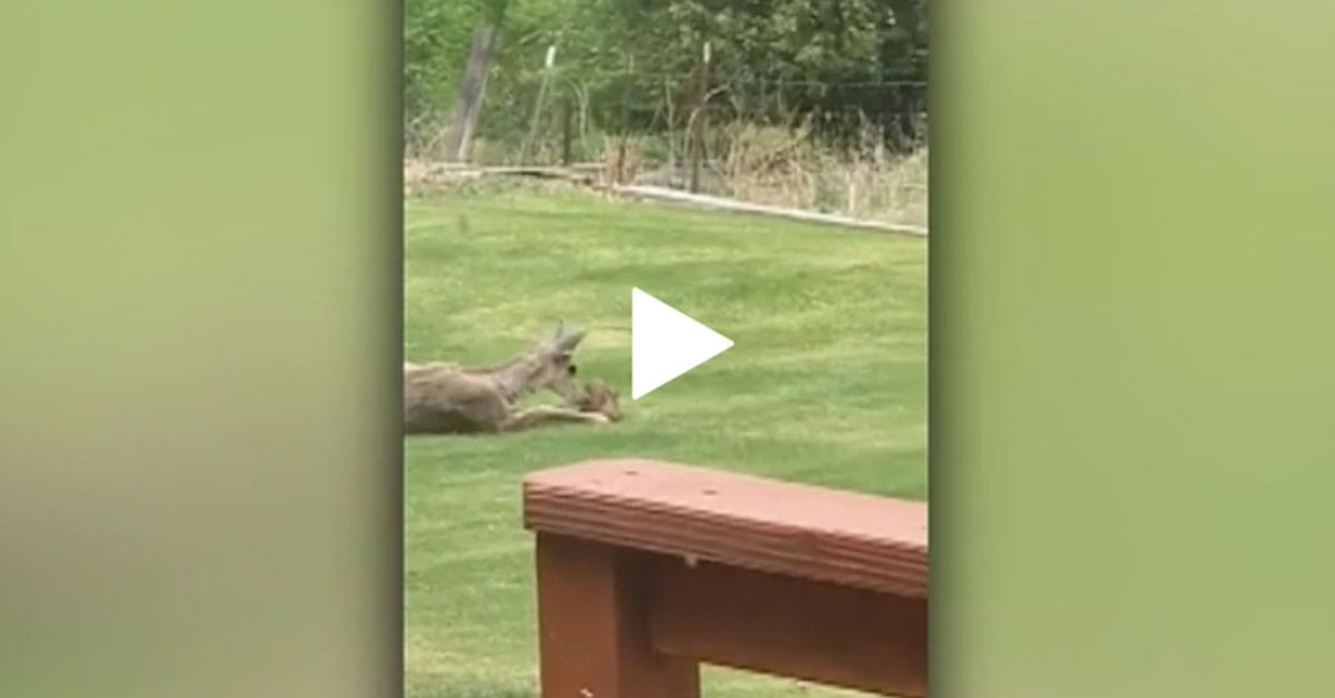 Watch: Real-life 'Bambi' moment