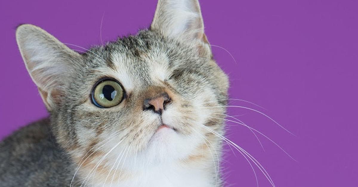 Kitties and K9s: Cindy Lou