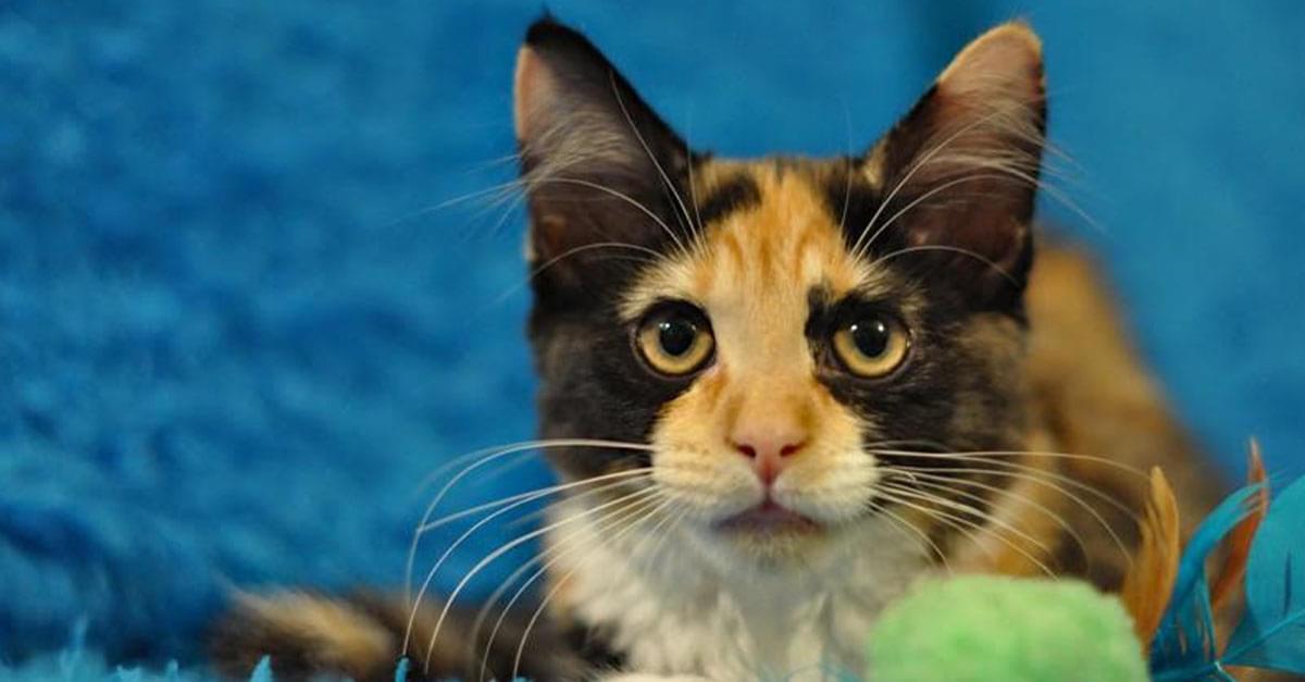 Kitties and K9s: Amaretto