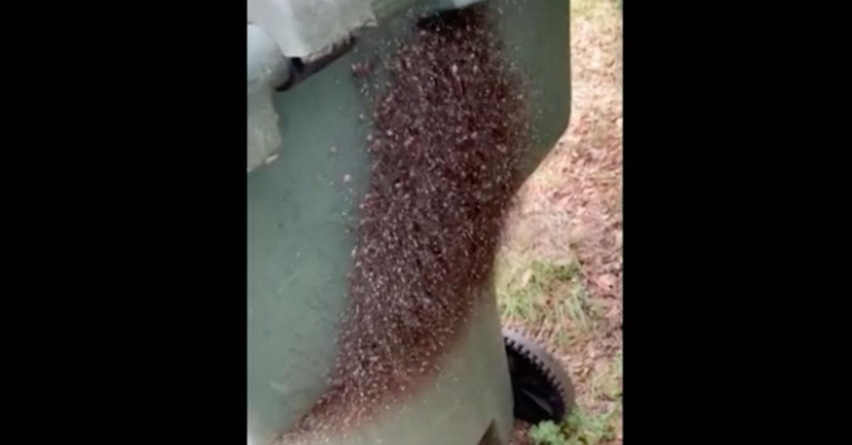 Watch: Thousands of Spiders on Man's Trash Bin