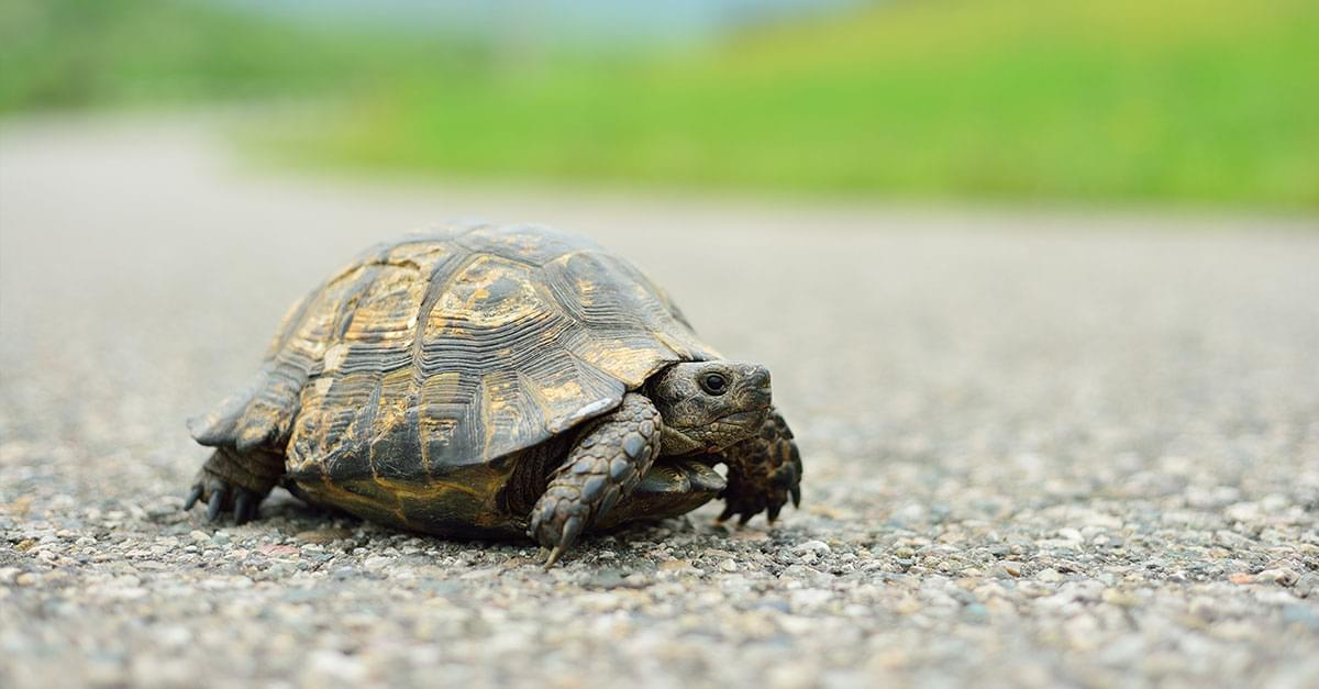 Concerned Boy Gets 'Turtle Crossing' Signs Installed After Writing Letter to Mayor
